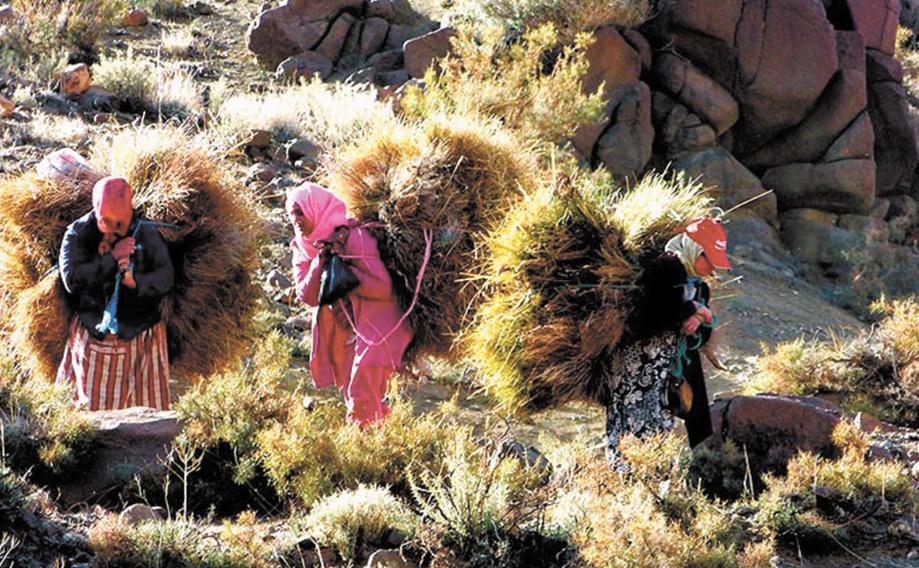 La population nomade au Maroc en fort recul