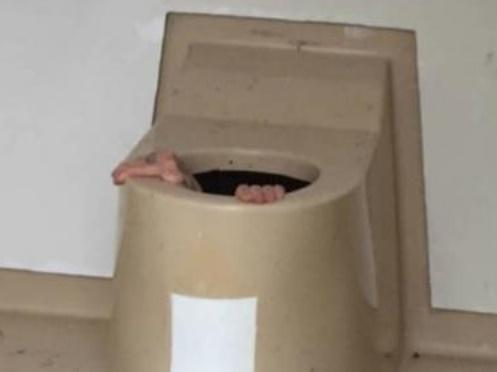 Insolite : Coincé dans les toilettes