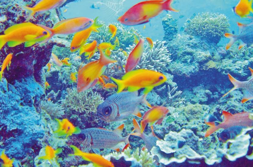Pour la protection et la lutte contre la pollution du milieu marin