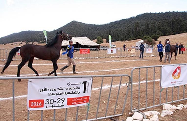 Course d'endurance équestre de Sidi Mguild