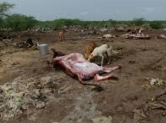 En Inde, les dalits se révoltent et les carcasses de vaches pourrissent
