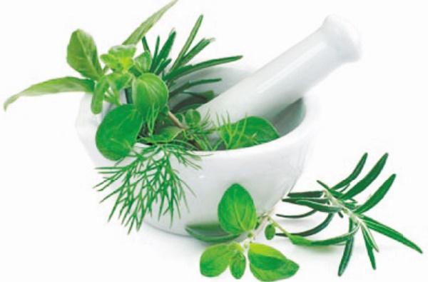 Vers la création d'un centre pour la valorisation des plantes aromatiques et médicinales
