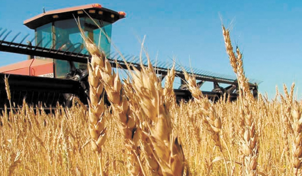 De bonnes récoltes mondiales de blé et de riz en perspective
