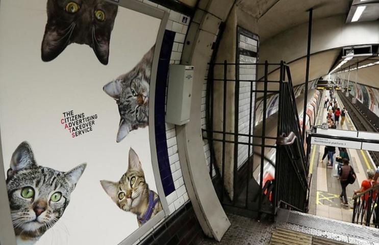 Insolite : Les chats chassent la pub
