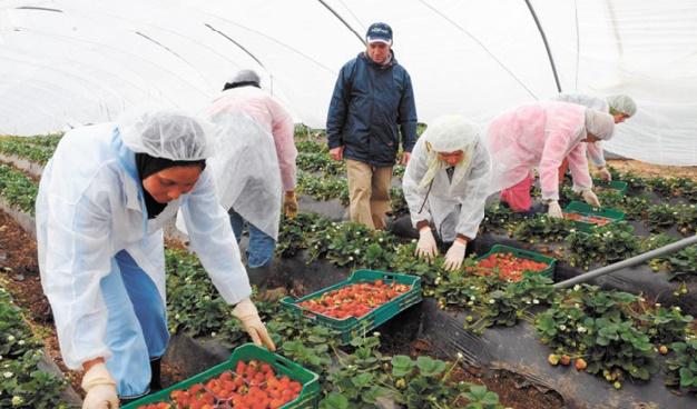 Hausse de 21% des exportations des fruits rouges durant la campagne agricole 2015-2016