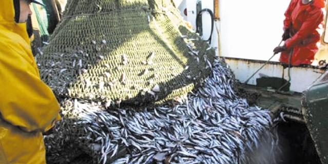 Incitations fiscales au secteur des pêches maritimes