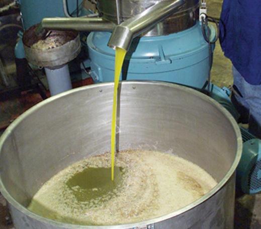 Hausse notable dans les cultures de l'olivier dans la région de Marrakech-Safi en 2016