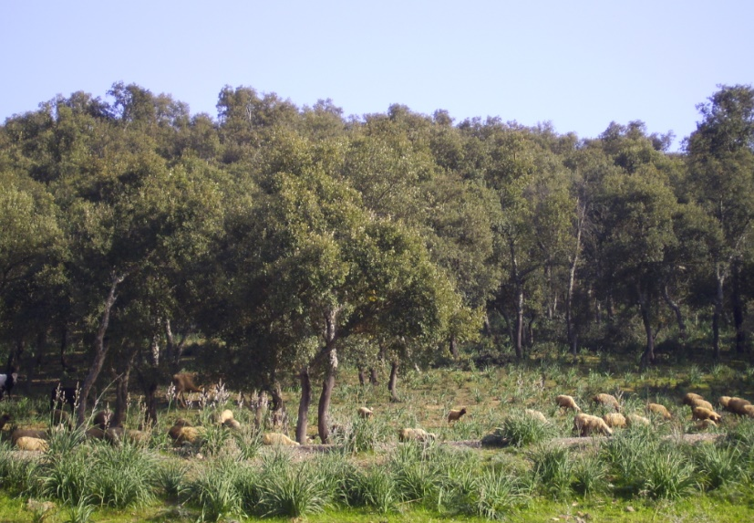 Les forêts, un capital naturel à préserver et pérenniser pour les générations futures