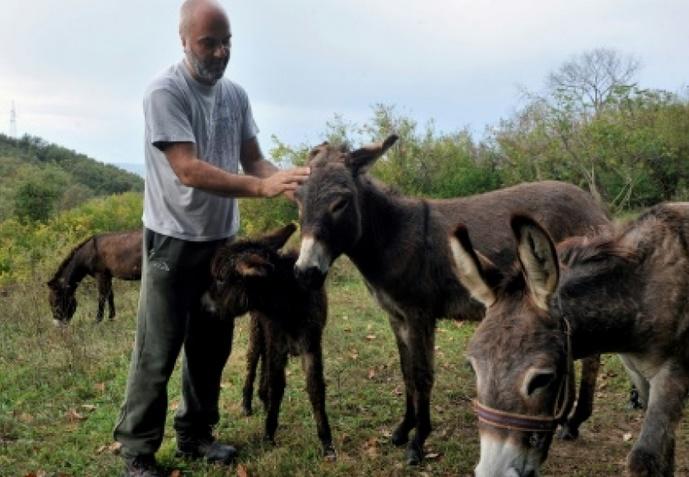 L'âne des Balkans cherche son salut dans le lait