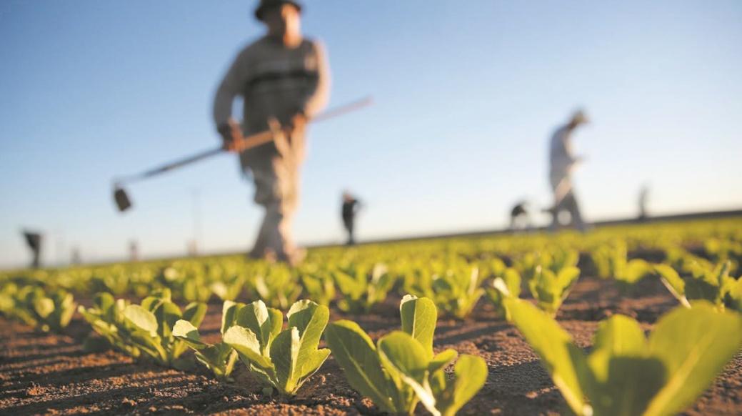 Satisfecit quant au démarrage de la campagne agricole