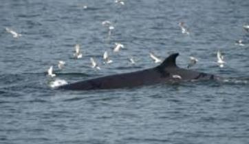 Observer les baleines au large de Bangkok