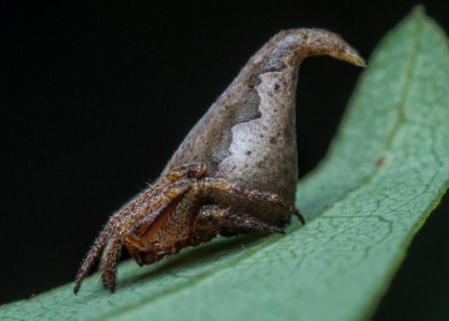 Insolite : Une araignée en hommage à Harry Potter