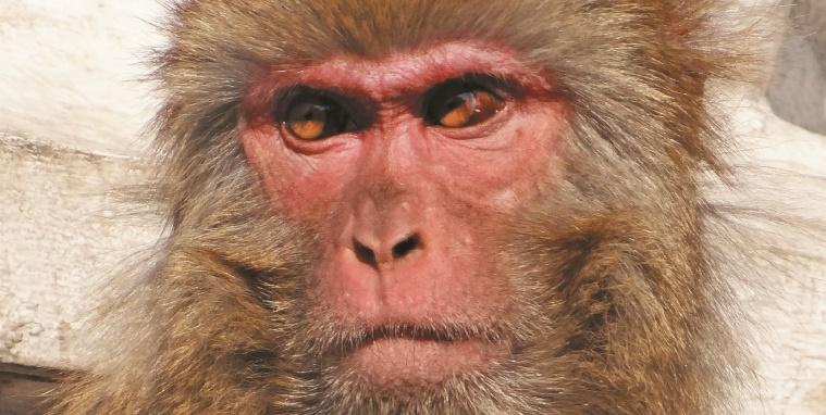 Conte de Noël pour adultes : La paonne et le macaque