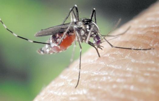 Le Zika met le monde en état d' urgence