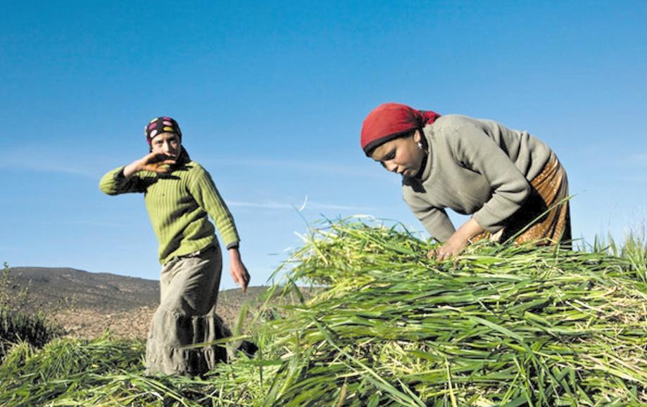Le rôle de la femme agricultrice dans le développement en Afrique au centre d'une rencontre à Aït-Melloul