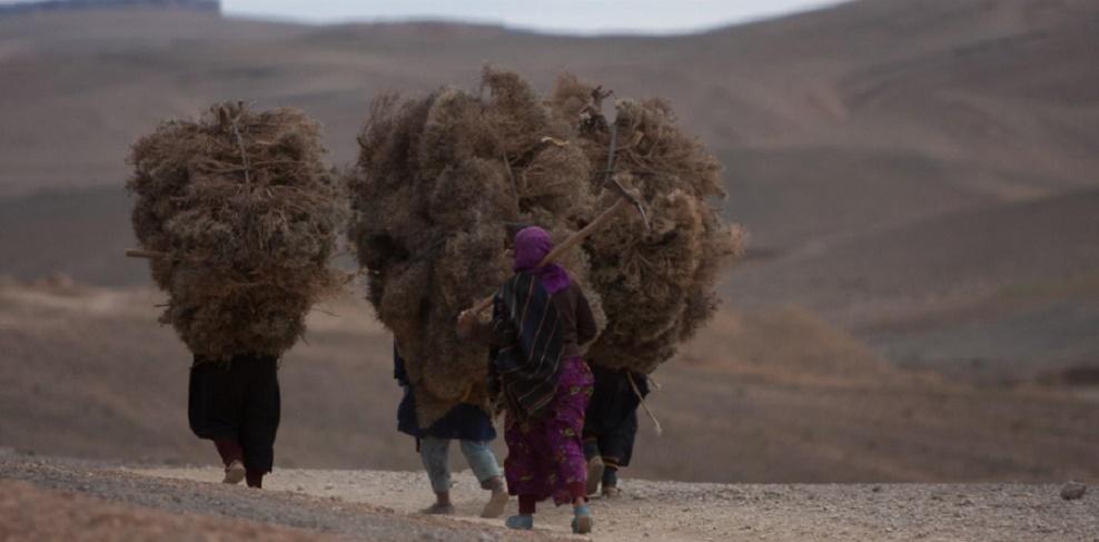 Le rapport alarmant d'un Maroc rural parent pauvre des politiques publiques