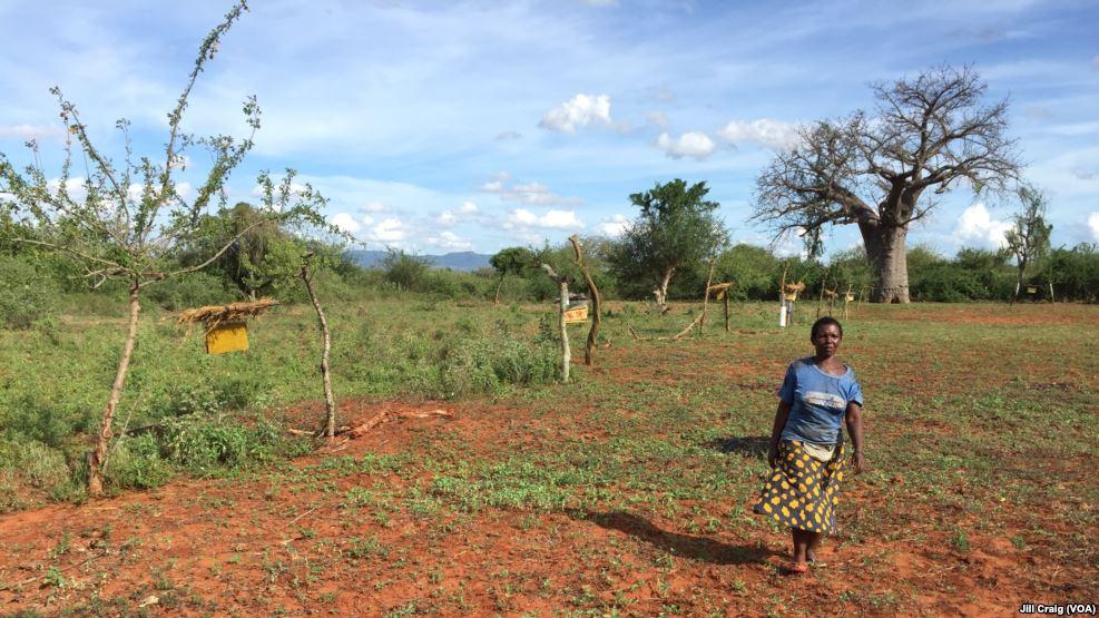 Entre pillage et braconnage, la guerre des pâturages sur les hauts plateaux kényans