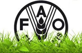 LA FAO appelle à l'autonomisation des femmes