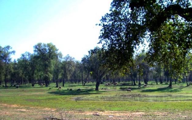 Ambitieux programme décennal de la forêt de Maâmora