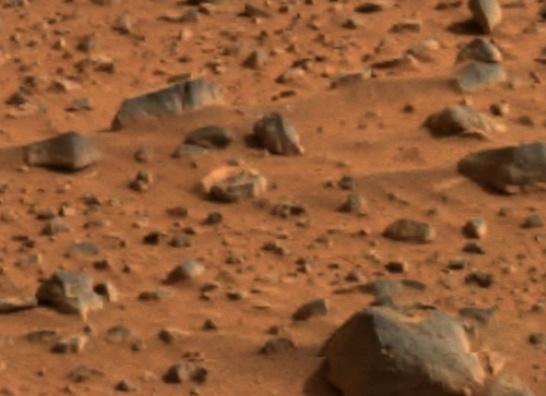 La pomme de terre pourrait pousser sur Mars