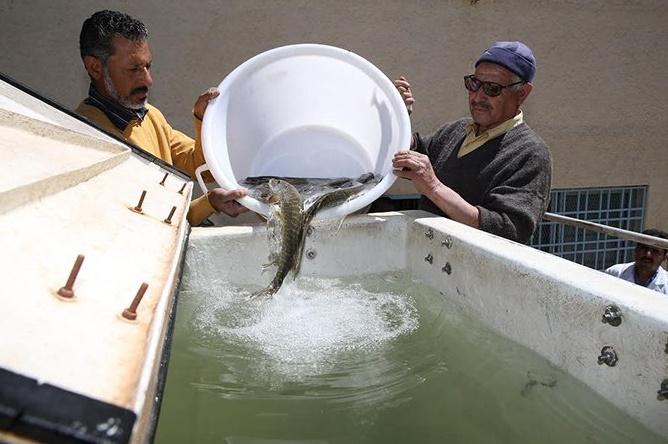Repeuplement du lac d'Afnourir en alevins et en brochets