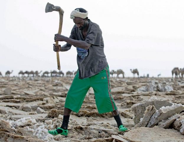 Les caravanes éthiopiennes de sel bousculées par la modernité