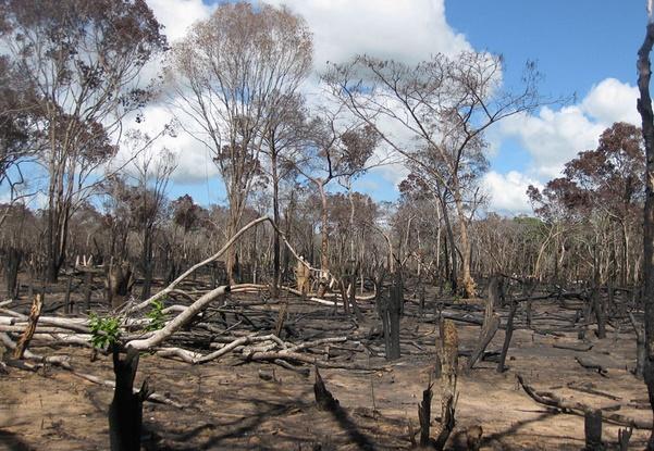 Le Mozambique en guerre contre l'exploitation illégale de ses forêts