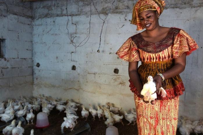 La tontine fait recette au Sénégal