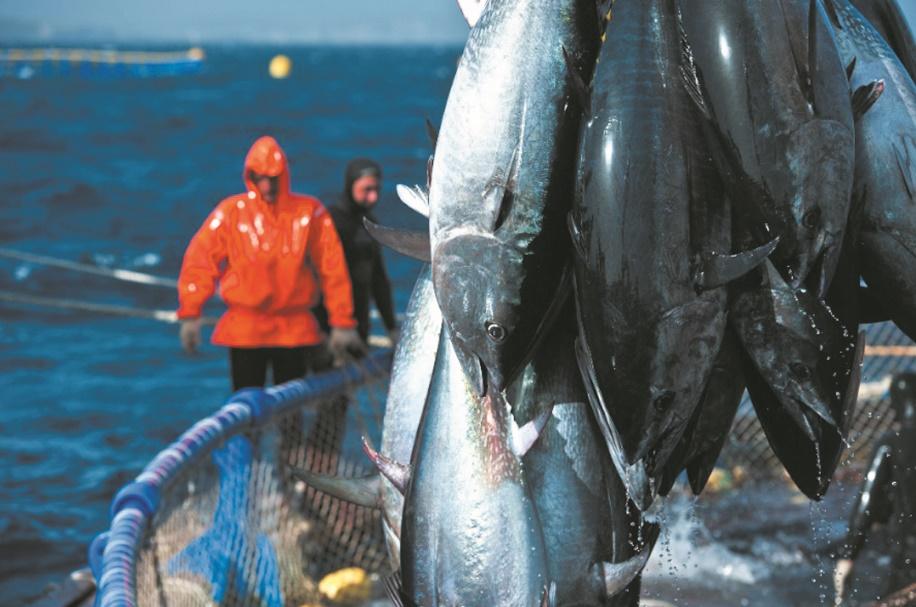 L'ONU appelle à la préservation des ressources de thon