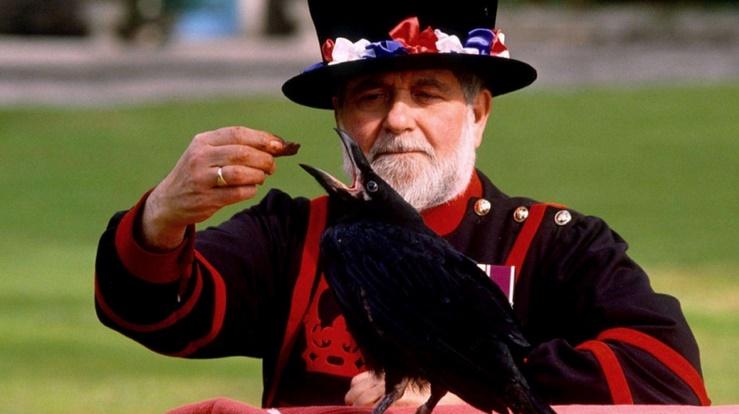 Insolite : Les corbeaux gardiens