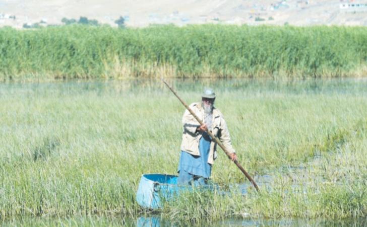 Kaboul, une étape protégée sur la route des oiseaux migrateurs