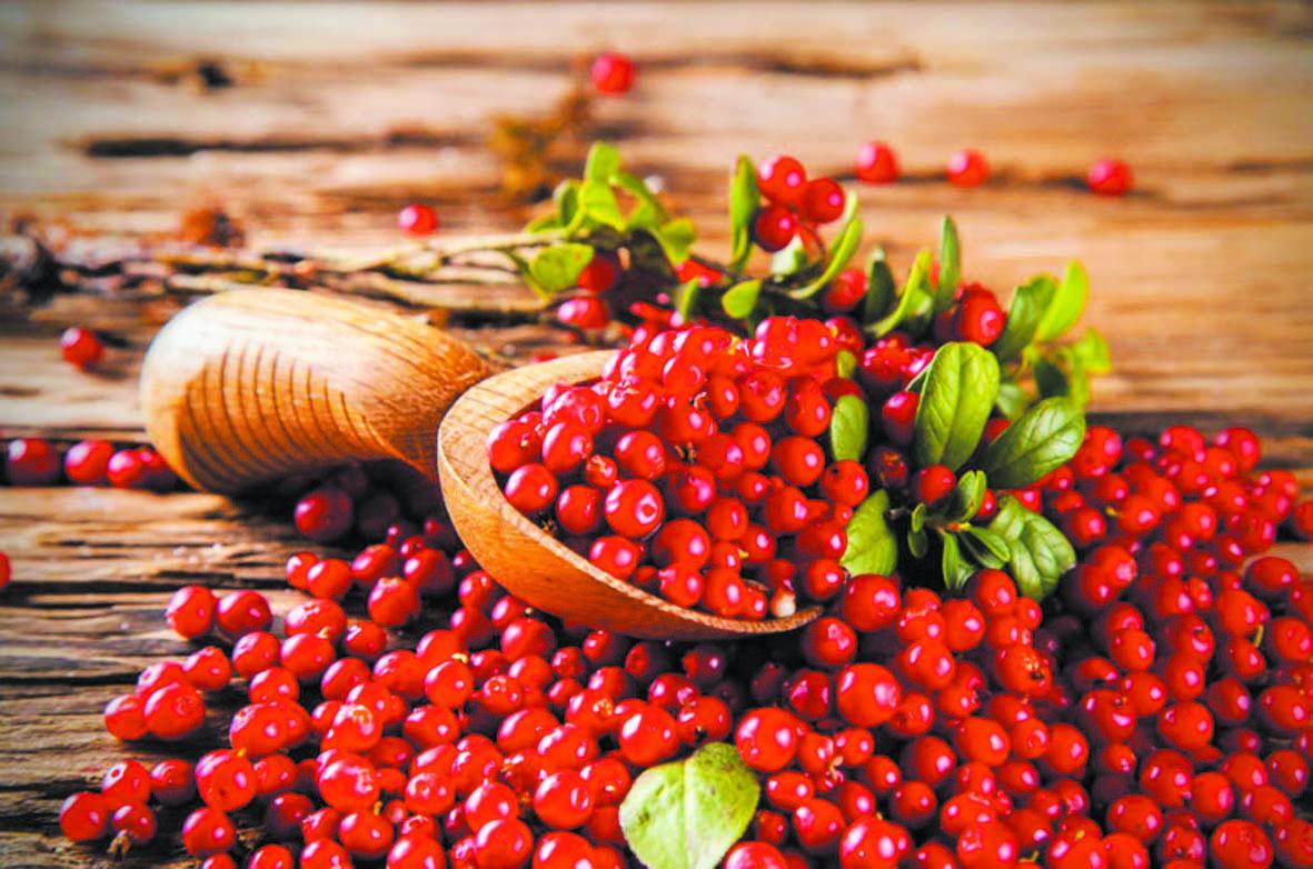 Les cranberries pour le bien-être intestinal