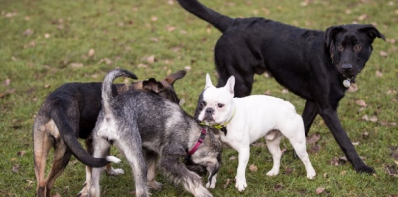 Deux gènes expliqueraient la domestication des chiens, selon des chercheurs