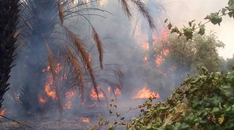 Un incendie ravage la palmeraie de Boudenib