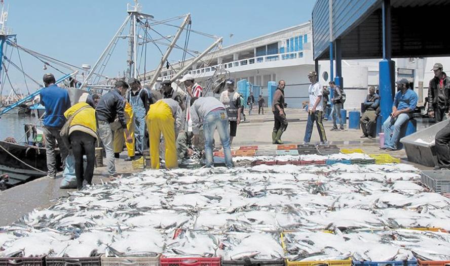Une étude pointe le manque de compétitivité du secteur de la pêche artisanale