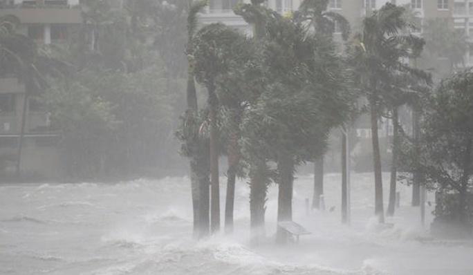 "Insolite : ""Ne tirez pas sur Irma"""
