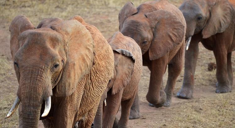 Insolite : Des éléphants noctambules