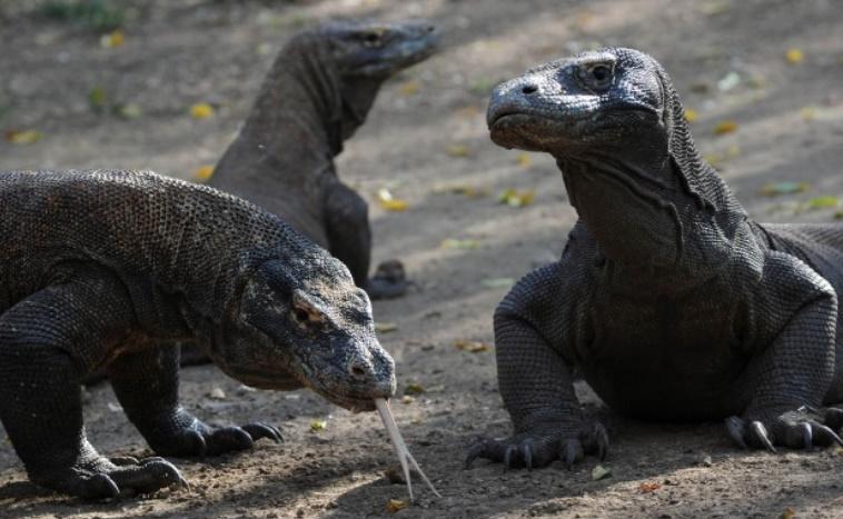 Risque d'extinction plus élevé pour les gros et petits animaux