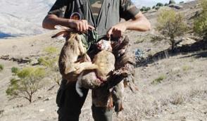 De plus en plus de chasseurs au Maroc