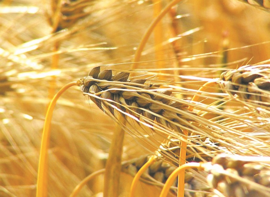 Léger rebond des prix mondiaux des produits alimentaires en septembre