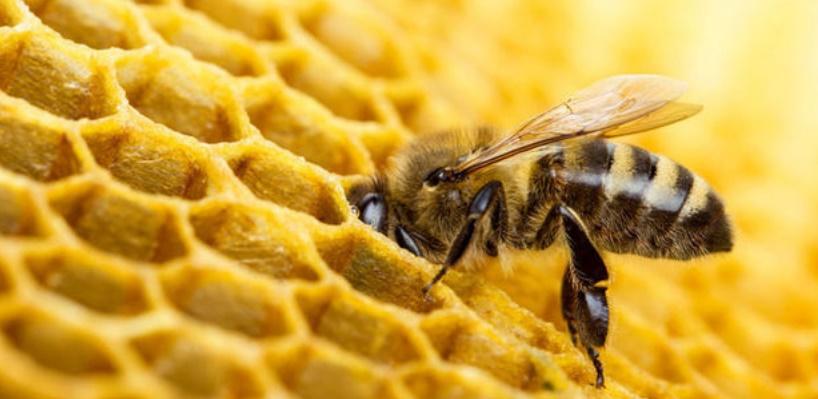 Des pesticides présents dans 75% du miel mondial