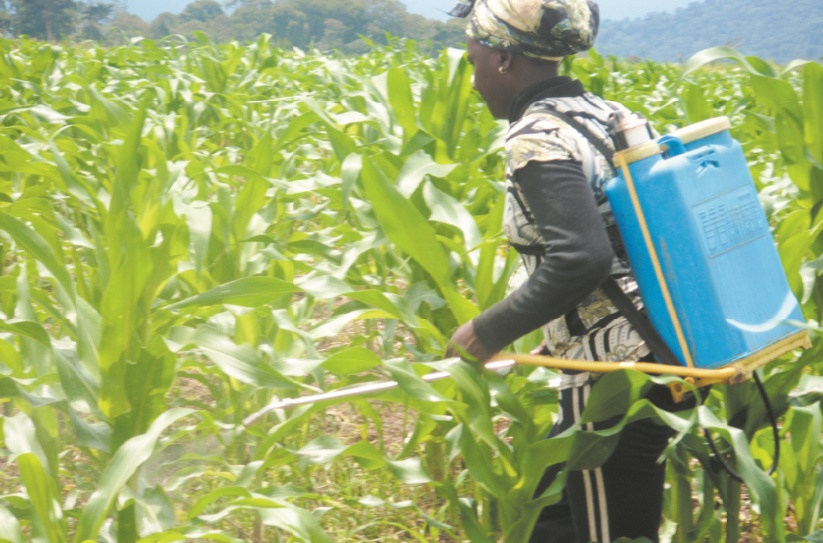 Cameroun : Quels freins à la micro-assurance agricole ?