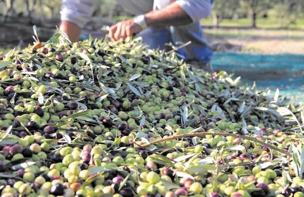Salon régional de l'olivier de l'Oriental à Guercif