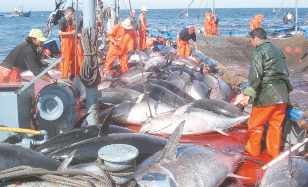Nouvelles normes de travail dans l'industrie de la pêche