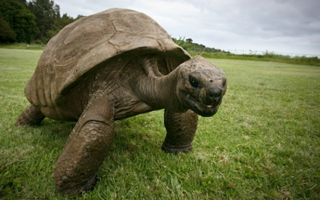 Insolite : Jonathan la tortue