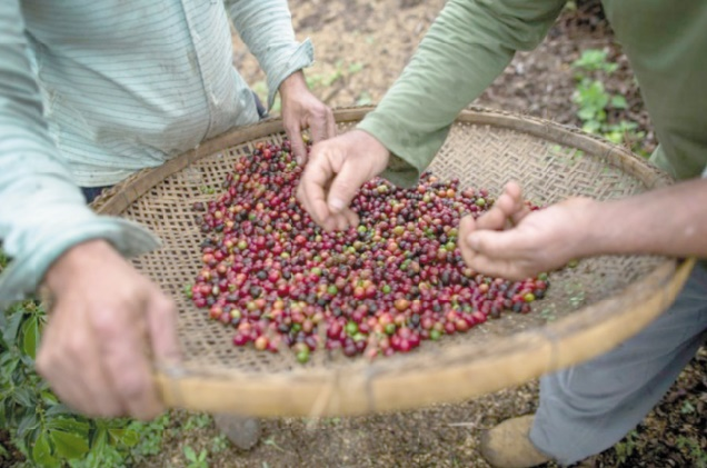 Les plantations de café, nouvelle niche touristique au Brésil