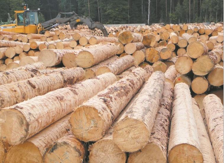 La production mondiale de bois enregistre une croissance accélérée