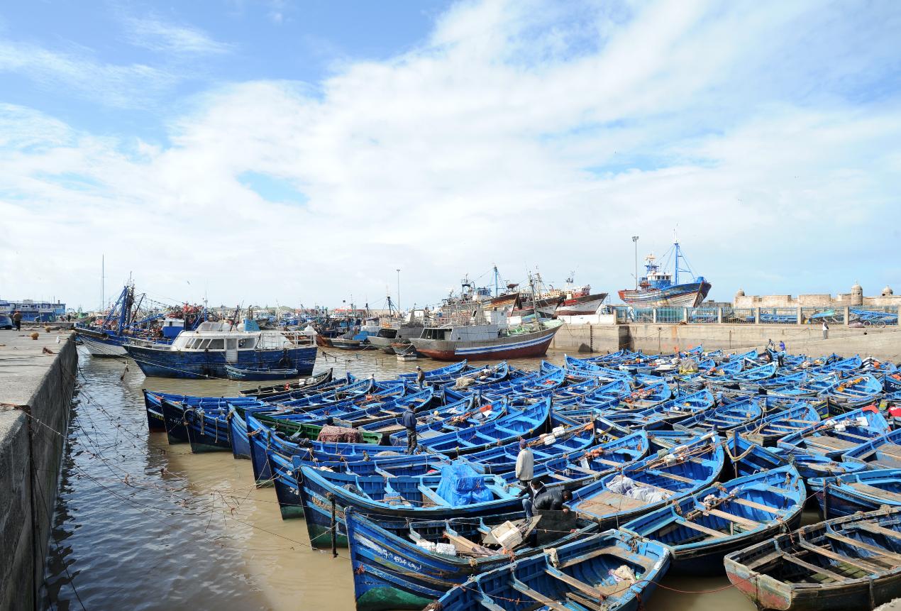Le problème du trafic de poisson refait surface à Essaouira