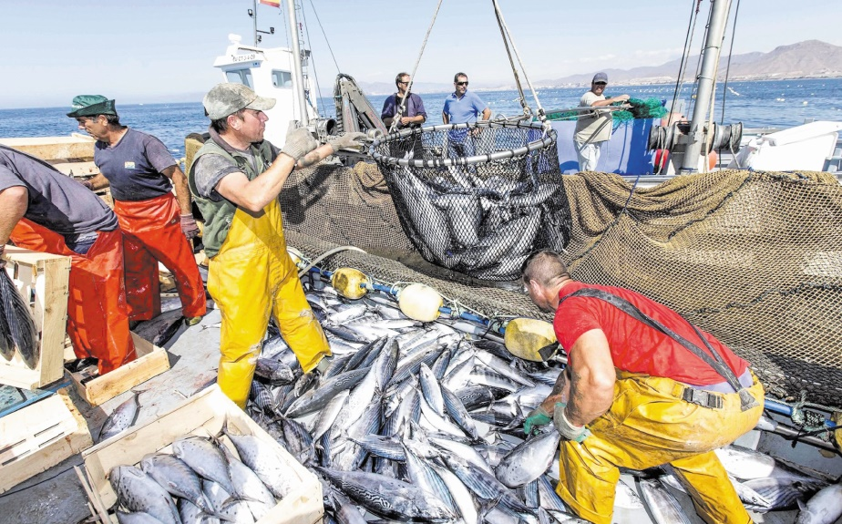 Feu vert pour le renouvellement de l'accord de pêche Maroc-UE