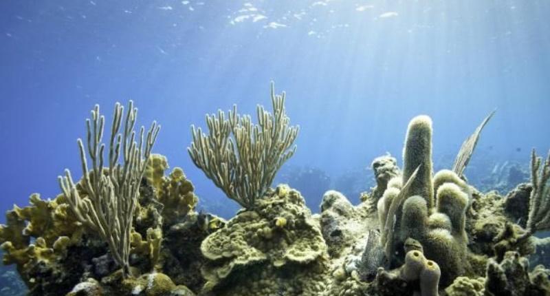 Accélération de la fréquence du blanchissement des récifs coralliens